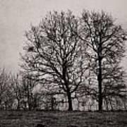 Trees In November Art Print
