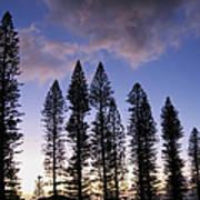 Trees In Silhouette Art Print