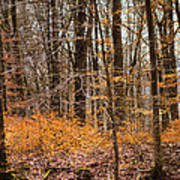 Trees In The Forest In March With Orange Leaves Art Print