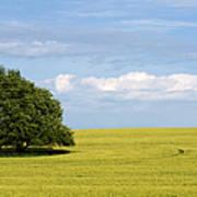 Trees In Wheat Field Art Print
