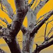 Winter Trees In Yellow Gray Mist 1 Art Print