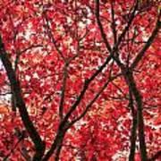 Trees Of Autumn Art Print