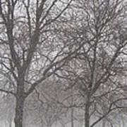 Trees Of Silence Art Print