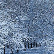 Trees Of Winter Art Print