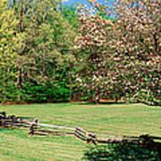 Trees On A Field, Davidson River Art Print