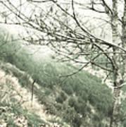 Trees On A Mountain Art Print