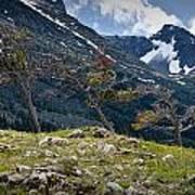 Trees On Top Of A Ridge At Glacier National Park Art Print