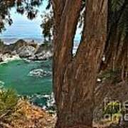 Trees Over Mcway Falls Art Print