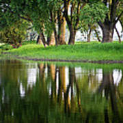 Trees Reflection On The Lake Art Print by Heiko Koehrer-Wagner