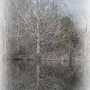 Tree's Reflection Art Print