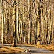 Trees Shadows Art Print