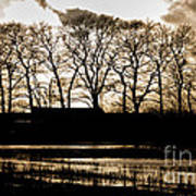 Trees Silhouettes Art Print