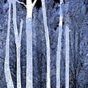 Trees Square Art Print