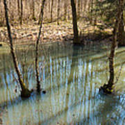 Trees Standing In The Water Art Print