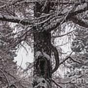 Trees Under Snow Art Print