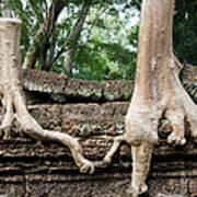 Trees United Art Print