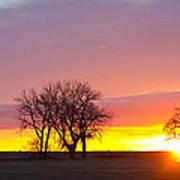 Trees Watching The Sunrise Panorama View Art Print