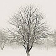 Treeternity Art Print