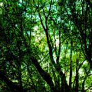 Treetops 1 Art Print