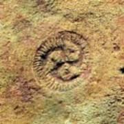 Tribrachidium Fossil Art Print