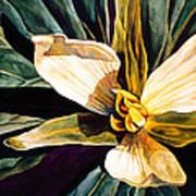 Trillium Art Print