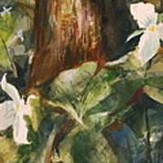 Trillium Woods 3 Art Print