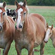 Trio Of Horses 2 Art Print