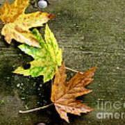 Trio Of Leaves Art Print