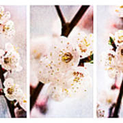 Triptych Light Of Spring 2 Art Print