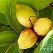 Tropical Almond Art Print
