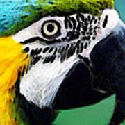 Tropical Bird - Colorful Macaw Art Print