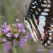 Tropical Butterfly Art Print