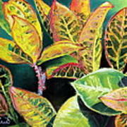Tropical Colorful Croton Leaves Art Print by Prashant Shah