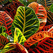 Tropical Croton Art Print