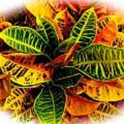 Tropical Croton Vignette Art Print by Lisa Cortez