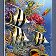 Tropical Fish A Art Print