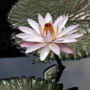Tropical Floral Elegance Art Print