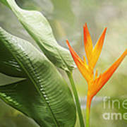 Tropical Flower Art Print by Natalie Kinnear