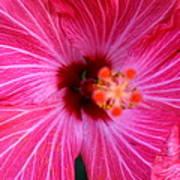Tropical Flower Time Art Print