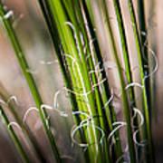Tropical Grass Art Print