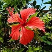Tropical Hibiscus 002 Art Print