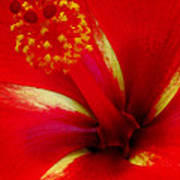 Tropical Hibiscus - Starry Wind 03a Art Print