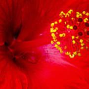 Tropical Hibiscus - Trinidad Wind 02a Art Print