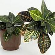Tropical Houseplant Art Print