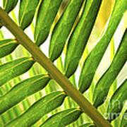 Tropical Leaf Print by Elena Elisseeva