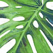Tropical Leaf With Blue I Art Print