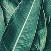 Tropical Palm Leaf, Dark Green Toned Art Print