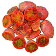 Tropical Red Prickly Pear Fruit  Art Print