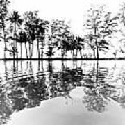 Tropical Reflections Art Print