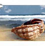 Tropical Shell 2 Art Print
